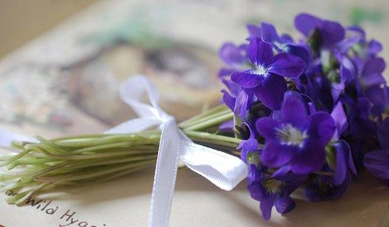 violetas_11_
