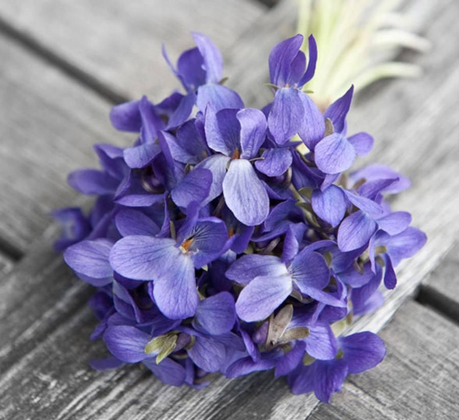 UN RAMITO DE VIOLETAS violetas_8_900x824