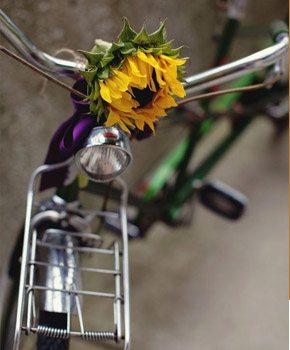 Novios a pedales bici_2_290x350