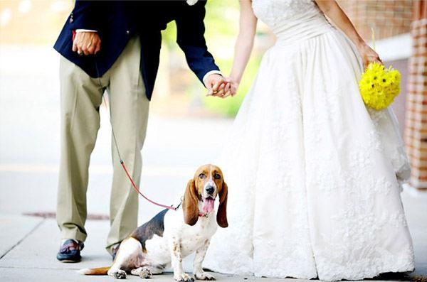 Tu mascota, el primer invitado a tu boda mascota_10_600x397