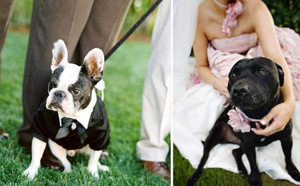 Tu mascota, el primer invitado a tu boda mascota_11_600x372