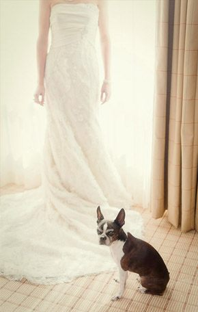 Tu mascota, el primer invitado a tu boda mascota_6_290x456