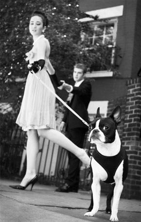 Tu mascota, el primer invitado a tu boda mascota_7_290x456