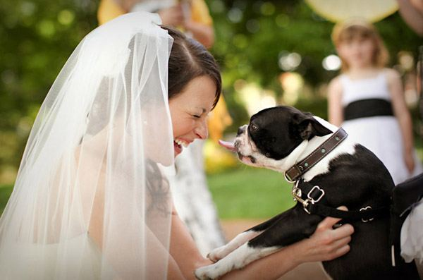 Tu mascota, el primer invitado a tu boda mascota_9_600x397