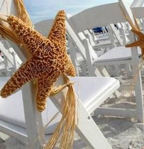 Estrellas de mar estrellas_2_290x300