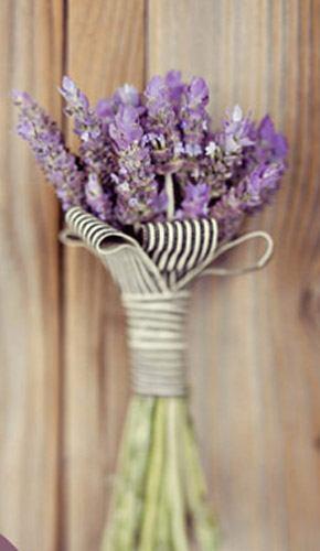 Bouquets de lavanda lavanda_11_290x500