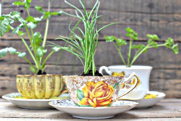 Diy: Macetas en tazas de té taza_planta_1_600x400
