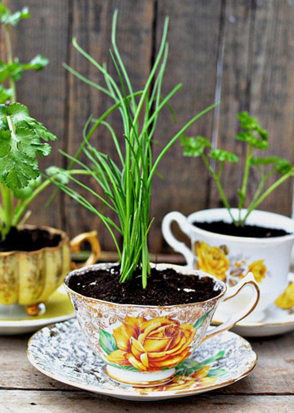 Diy: Macetas en tazas de té taza_planta_4_600x842