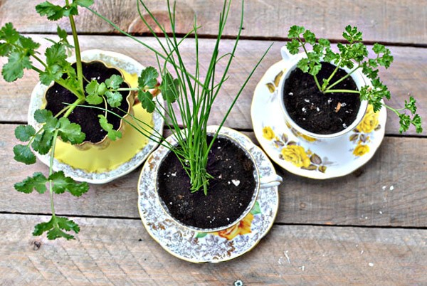 Diy: Macetas en tazas de té taza_planta_5_600x402