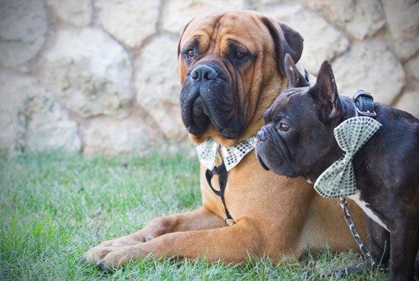 Noa & Álvaro: boda en el jardín noa_y_alvaro_3_600x402