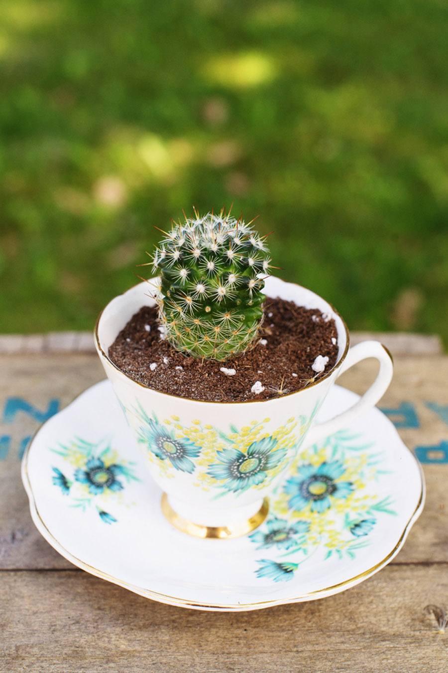 DIY MINI CACTUS EN TAZAS DE TÉ boda-cactus-diy