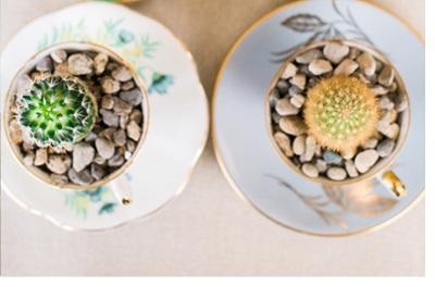 DIY MINI CACTUS EN TAZAS DE TÉ cactus-diy