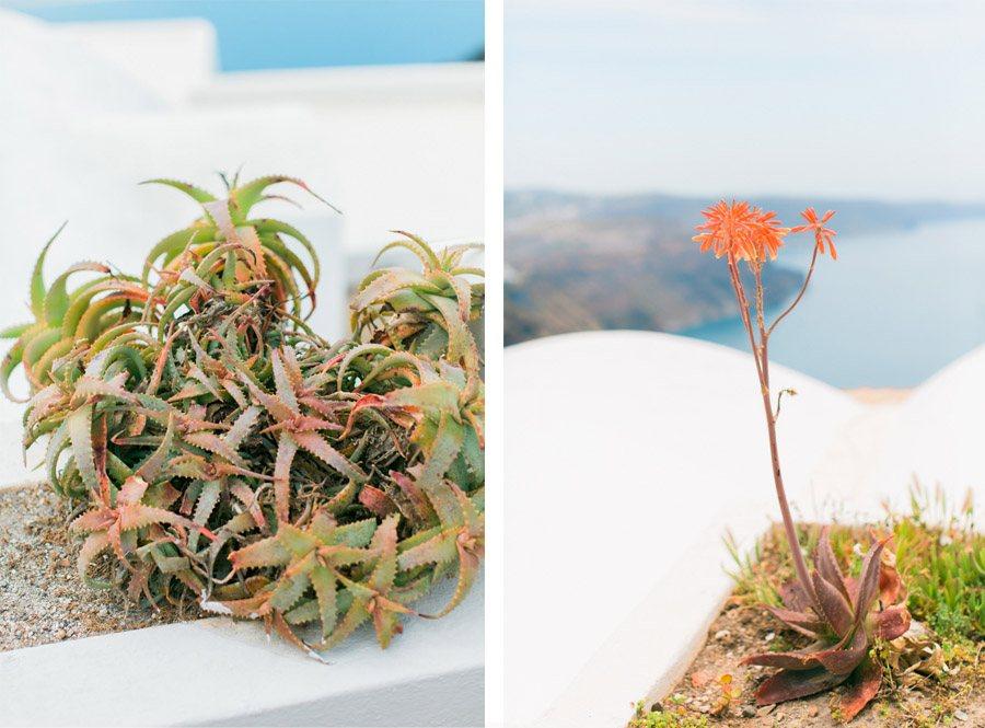 BODA ÍNTIMA EN SANTORINI santorini-vegetacion