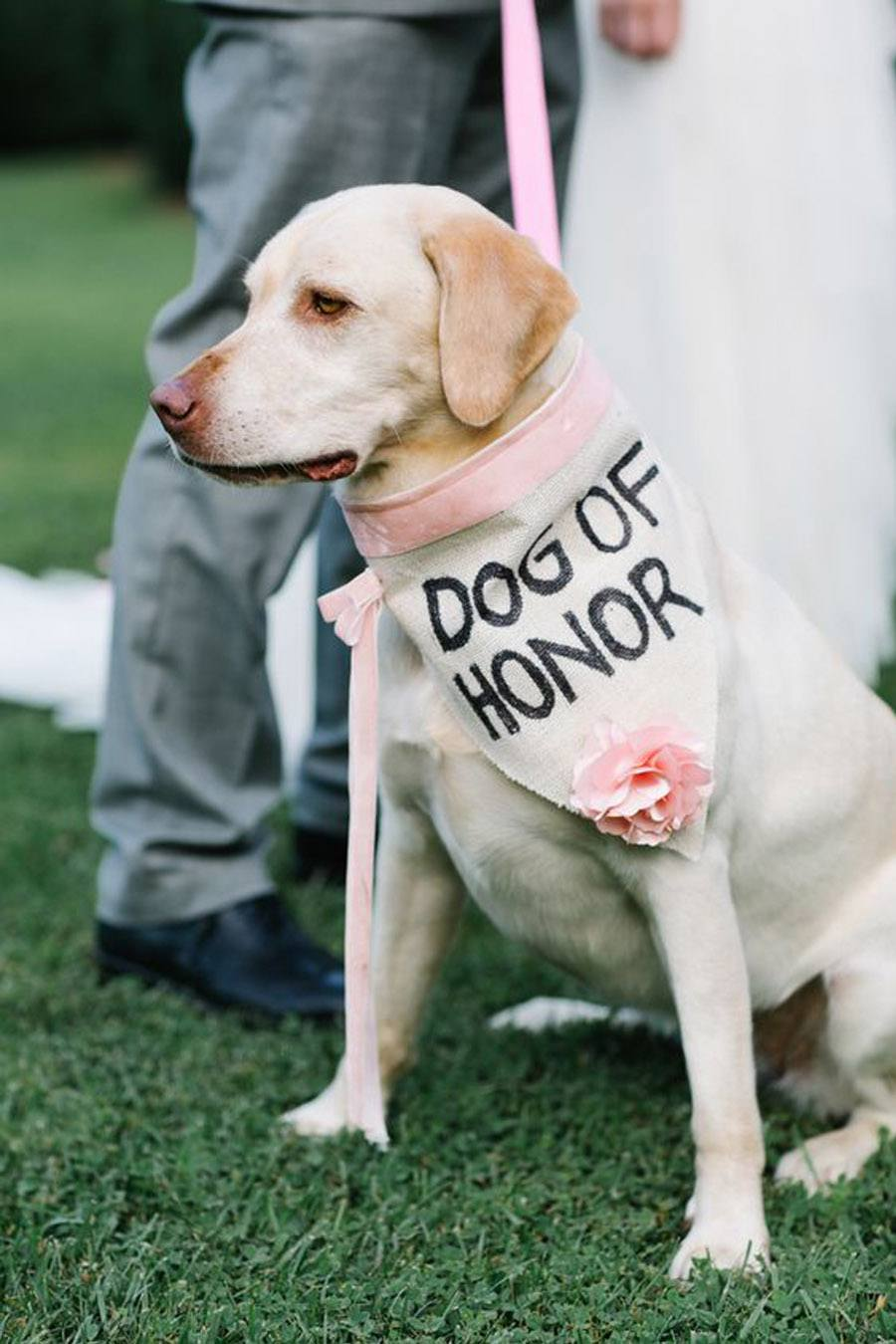 DOG OF HONOR-PERRO DE HONOR dog-of-honor