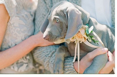 DOG OF HONOR-PERRO DE HONOR perro-honor