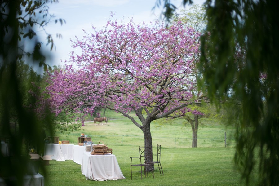 ELI & JOAN: UNA BODA DE FIESTA MAYOR picnic-boda