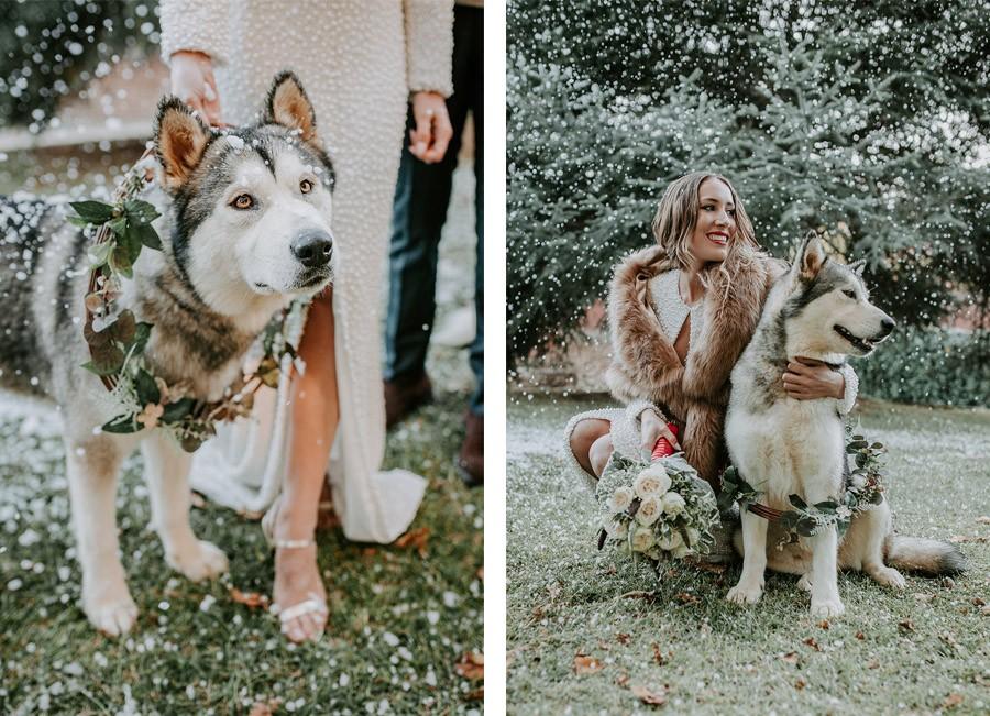 ¡OH MERRY LOVE! perro-boda