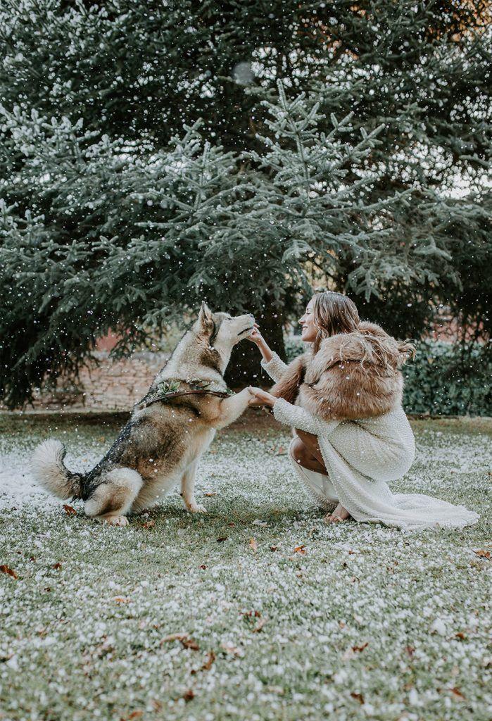 ¡OH MERRY LOVE! perro-novia-699x1024